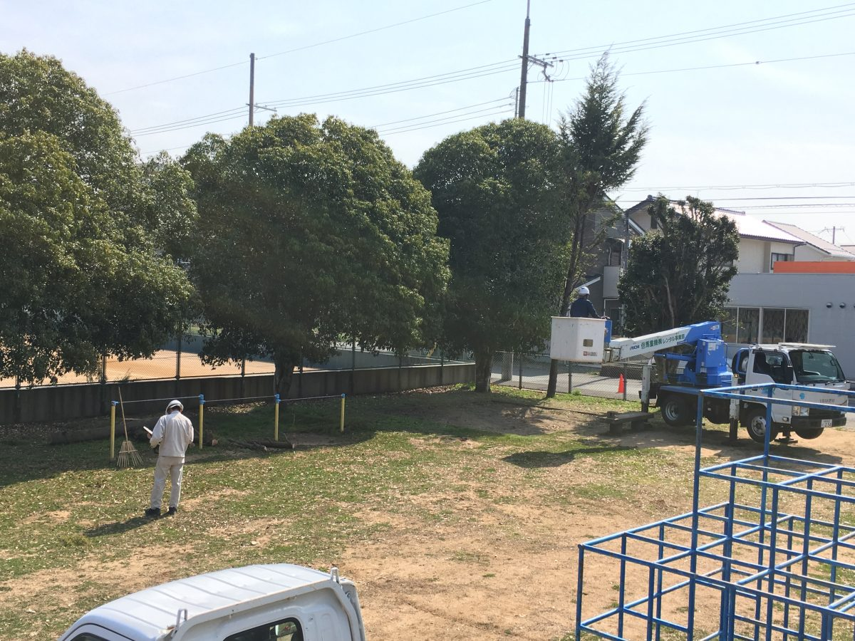 福知山市和久市公園の樹木伐採剪定